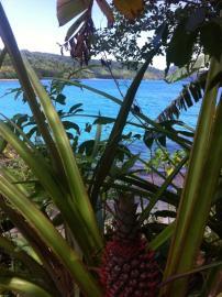 Im Wald der Insel wächst die Nachspeise